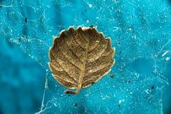 Малые высушенные лист упали в сеть паука Макрос Стоковая Фотография