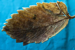 Малые высушенные лист упали в сеть паука Макрос Стоковая Фотография RF