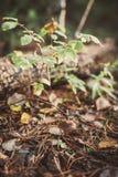 Малые грибы в мхе Осень Стоковое Фото