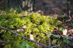 Малые грибы в мхе Осень Стоковое фото RF