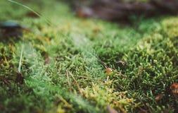 Малые грибы в мхе Осень Стоковые Фото