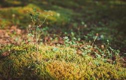 Малые грибы в мхе Осень Стоковое Изображение