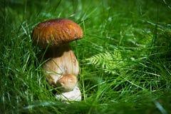 Малые грибы в луге Стоковое Фото