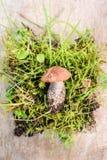 Малые грибы лежа на таблице Стоковые Изображения