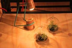 Малые декоративные цветки Стоковые Фото