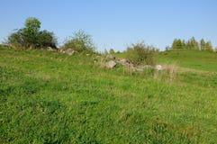 Малые деревья на камнях в зеленой траве Стоковое Фото