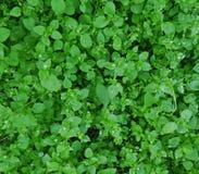 Малые листья зеленого цвета с некоторыми белыми цветками Стоковое Фото