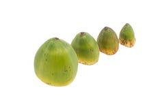 Малые кокосы Стоковые Изображения RF