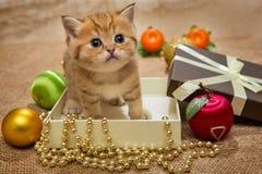Малые котенок и украшение рождества стоковое изображение