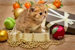 Малые котенок и украшение рождества стоковые фото