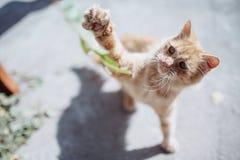 Малые красные игры котенка Стоковое фото RF