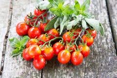 Малые красные томаты вишни на старом деревянном столе в деревенском стиле Стоковые Фото
