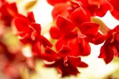 малые красные цветки, природа Стоковая Фотография