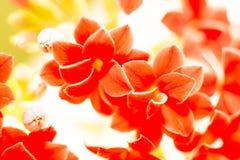 малые красные цветки, природа Стоковые Изображения