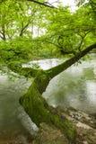 Малые мосты и текущая вода Стоковые Изображения RF