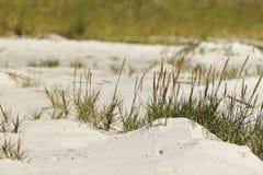 Малые неоткрытые овсы моря стоковые фото