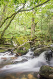 Малые падения в лес Стоковая Фотография