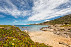 Малые песчаный пляж и цветки на скалистом побережье Корсики стоковые изображения