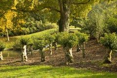 Малые пнистые деревья с листвой Стоковые Изображения RF