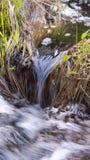 Малые подачи потока внутри к заводи Стоковые Фотографии RF