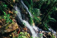Малые приливы от водопада & x28; Высокоскоростное Shutter& x29; стоковое изображение rf