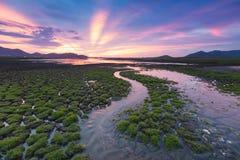 Малые пути воды на треснутой земле Стоковое Изображение RF