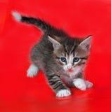 Малые пушистые striped игры котенка на красном цвете Стоковые Фото