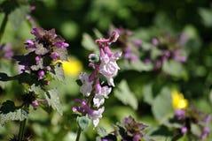 Малые розовые полевые цветки Стоковое фото RF