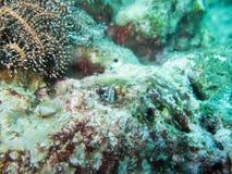 Малые рыбы в океане Стоковое Фото