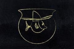 Малые рыбы в шаре нося шляпу ребра акулы стоковое фото rf