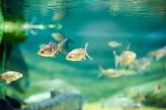 Малые рыбы с большим кабелем стоковая фотография rf