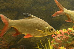 Малые рыбы Стоковые Фото