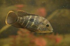 Малые рыбы Стоковое фото RF
