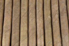 Малые сигары в случае сигары Стоковые Фотографии RF