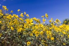 Малые солнцецветы стоковые изображения rf