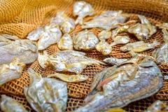 Малые сухие рыбы на сети Стоковые Фотографии RF