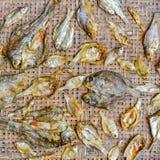 Малые сухие рыбы на сети Стоковые Изображения RF