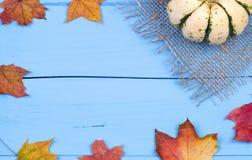 Малые тыква и листья клена стоковые фотографии rf
