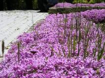 Малые фиолетовые цветки с зеленой травой Стоковые Изображения