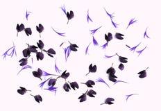 Малые цветки Стоковое Изображение
