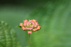 The   малые цветки Стоковые Фотографии RF