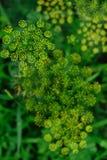 Малые цветки Стоковые Фотографии RF