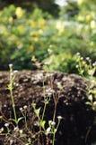 Малые цветки Стоковое фото RF