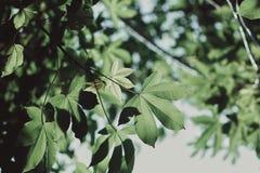 Малые цветки Стоковое Изображение RF
