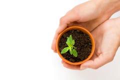 Малые цветочный горшок и зеленое растение стоковые фото