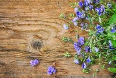 Малые чувствительные голубые цветки персиянки veronica, на деревянном столе Стоковые Изображения RF