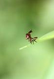 Малые dragonflies на зеленых лист Стоковые Фото