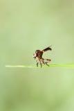 Малые dragonflies на зеленых лист Стоковые Изображения