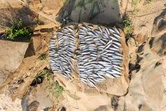 Малые fishs суша на острове Дон Khon Стоковая Фотография RF
