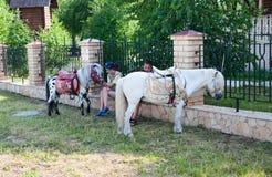 Малые ponyes ждать детей Стоковое Изображение